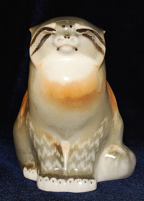 Хаус дикий кот